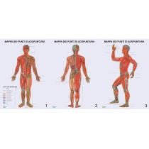 Mappe anatomiche per...